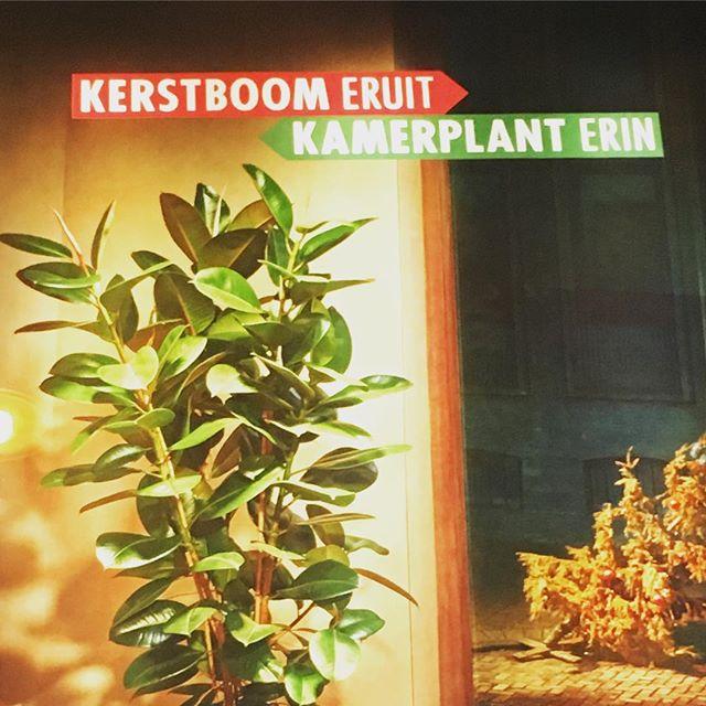 .....kerstboom-stammetje afzagen en opsturen naar Merrexmas! 😋🎄(Zie website) #mooiwatplantendoen #recycle #upcycle #kerstboomeruit