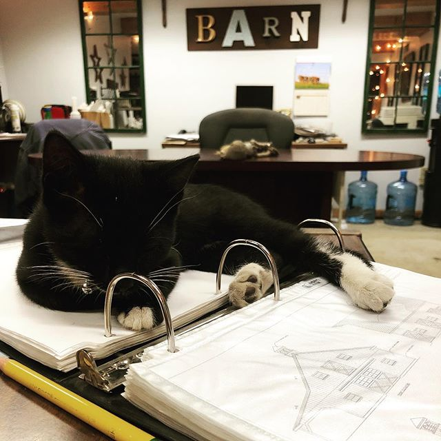 Reviewing barn plans #officemascot #barndepot