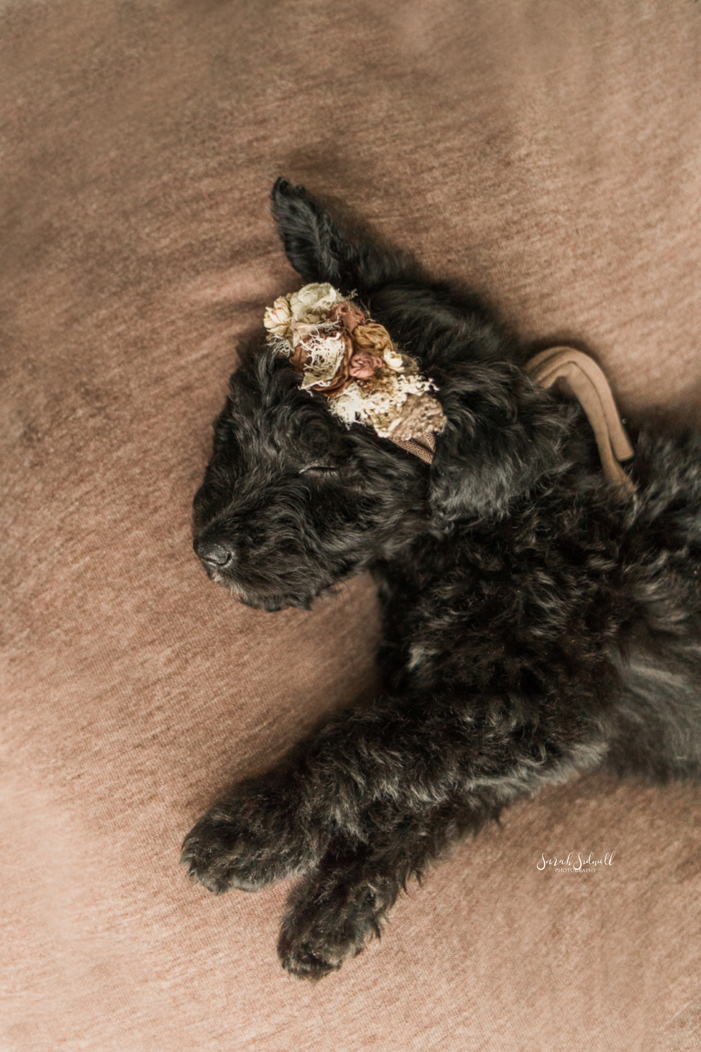 Newborn Puppy Session | Sarah Sidwell Photography