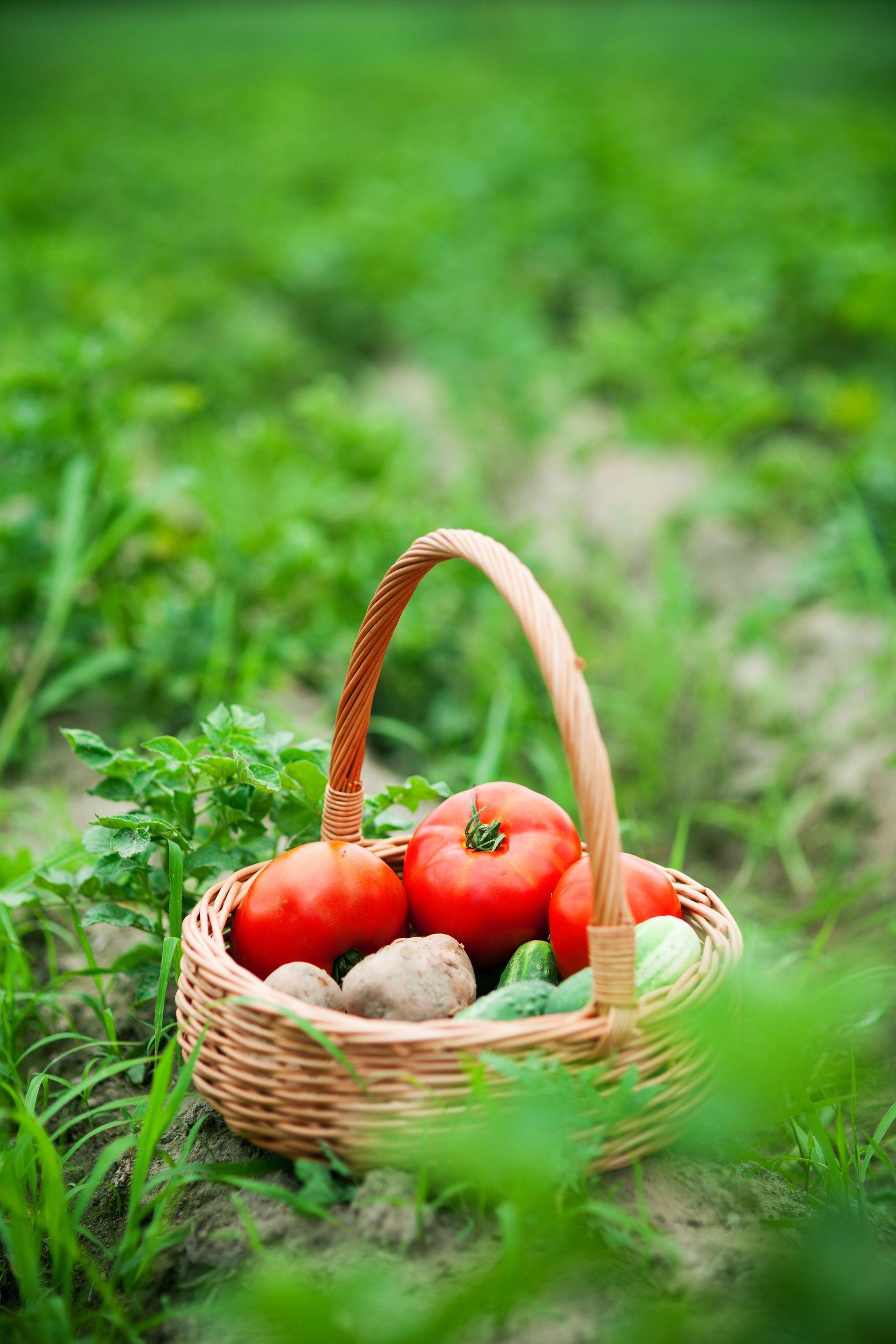 Oleastro – Fit für gesundes Gemüse aus dem eigenen Garten