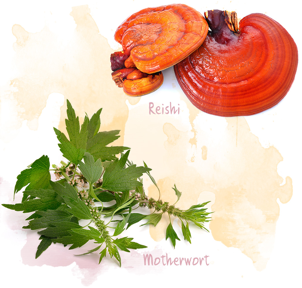 Reishi and Motherwort