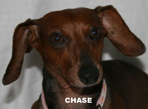 chase_head.jpg