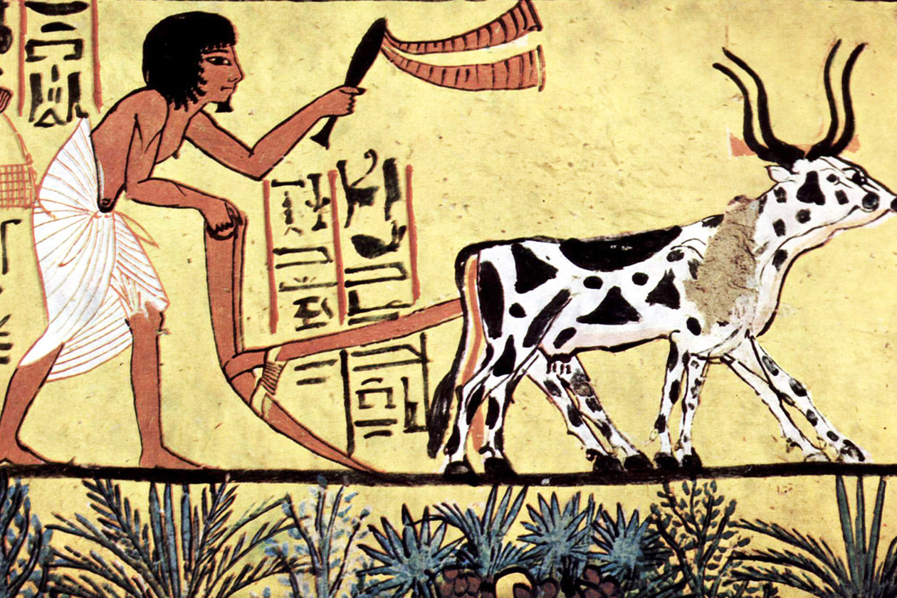 A fresco showing domesticated oxen being used to plow crop fields for planting.