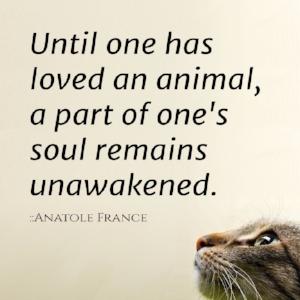 608267637d644cfbe6989bbaae2fcb5c--pet-quotes-cat-cat-love-quotes.jpg