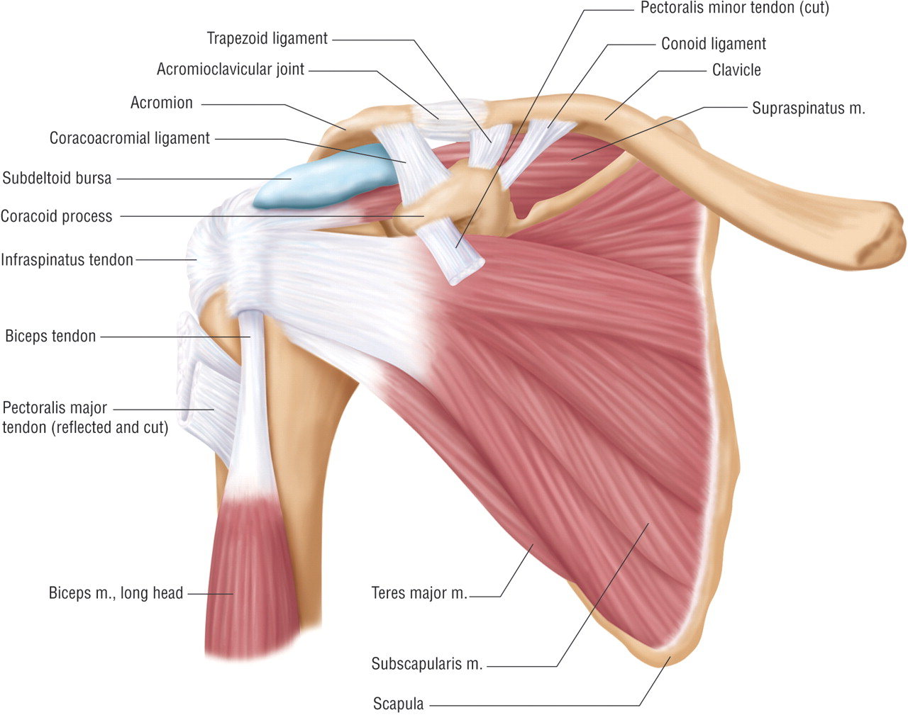 shockwave therapy for rotator cuff and supraspinatus impingement