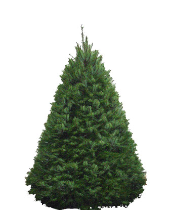 douglas-fir-tree.jpg