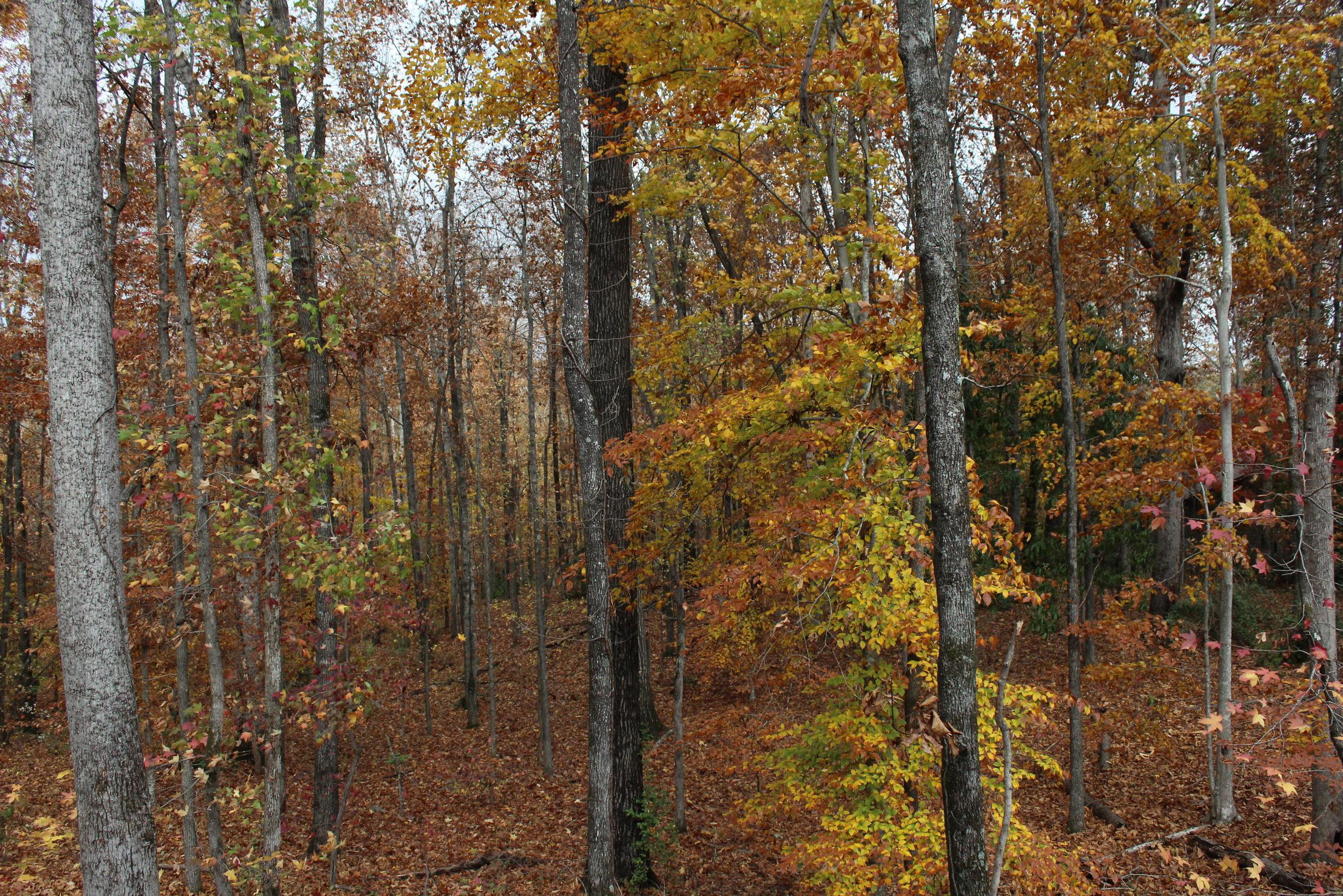 Timber Appraisal