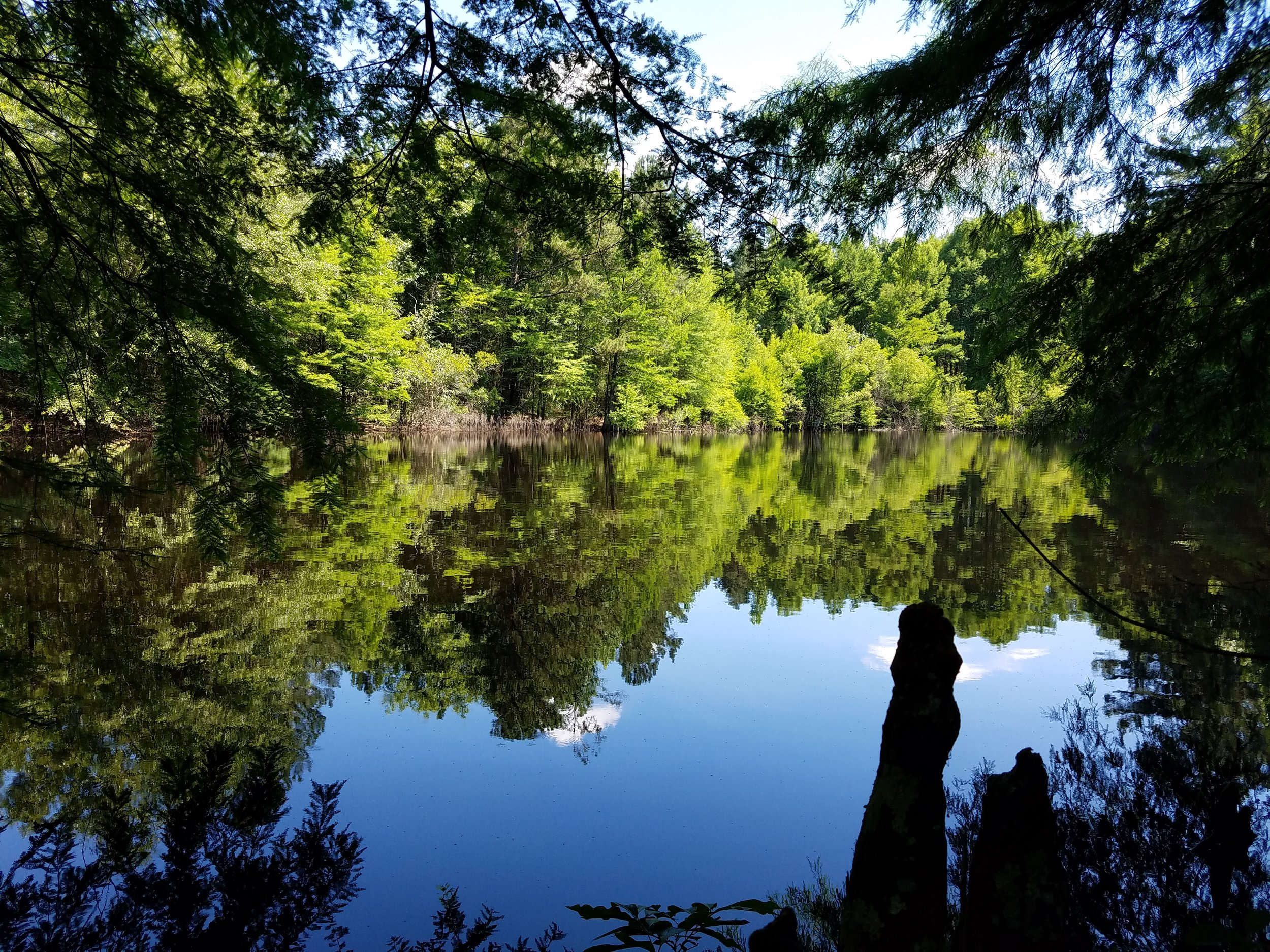 Forest Management Plans