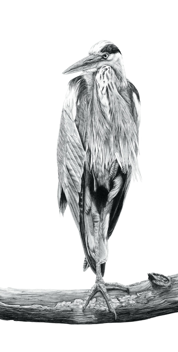 Graphite art - click image to view gallery
