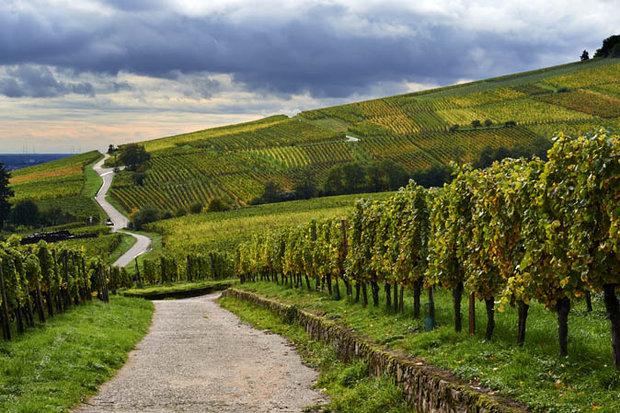 France-vines-683883.jpg