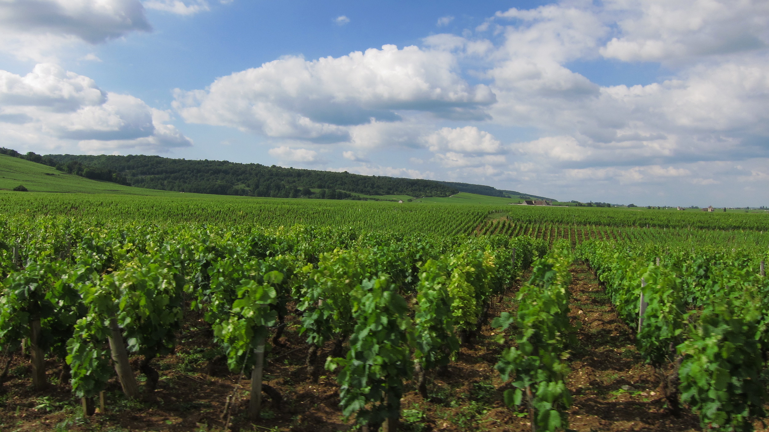Welcome to Burgundy.