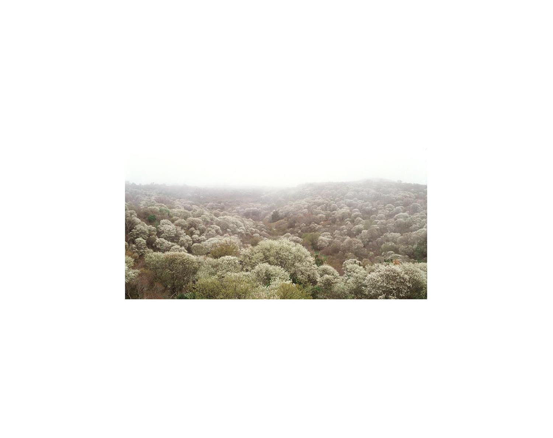 landscapes_0010-Edit.jpg