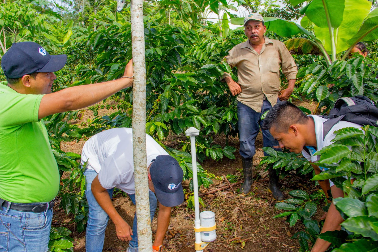 CRU Kafe piloted their affordable weather stations in Nicaragua with Fairtrade International and the CLAC,the Latin American and Caribbean Network of Fair Trade Producers.