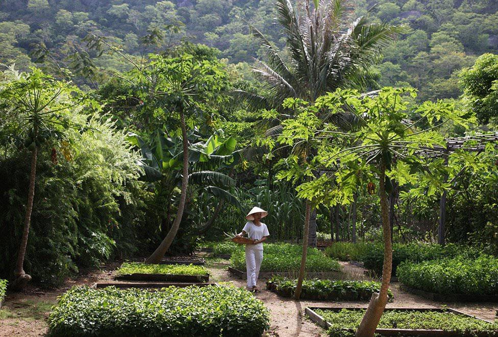 Ninh Van Bay Vietnam