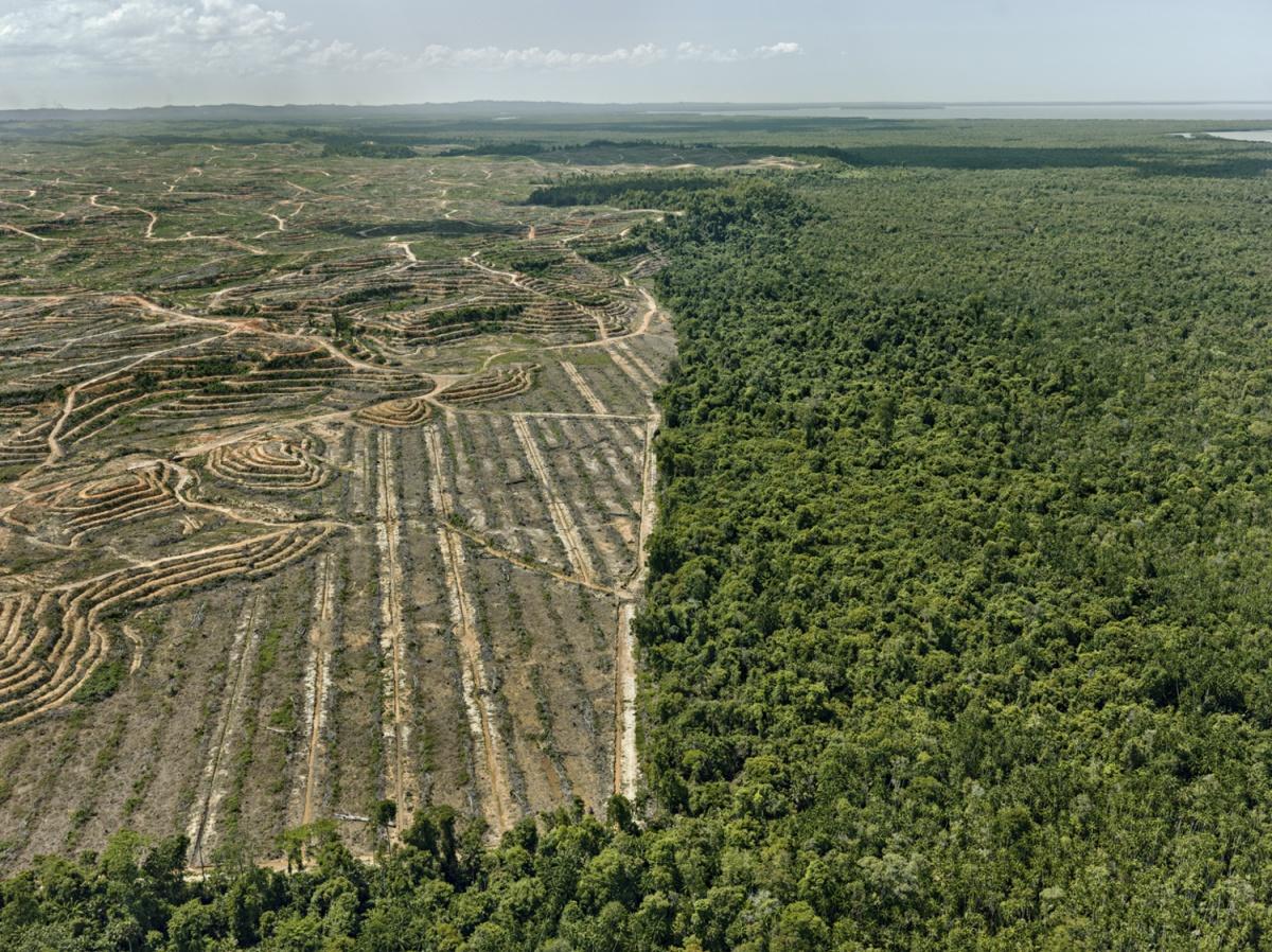Clearcut #1, Palm Oil Plantation, Borneo, Malaysia 2016 / Photo: © Edward Burtynsky/courtesy Howard Greenberg and Bryce Wolkowitz Gallery, New York/Nicholas Metivier Gallery, Toronto.