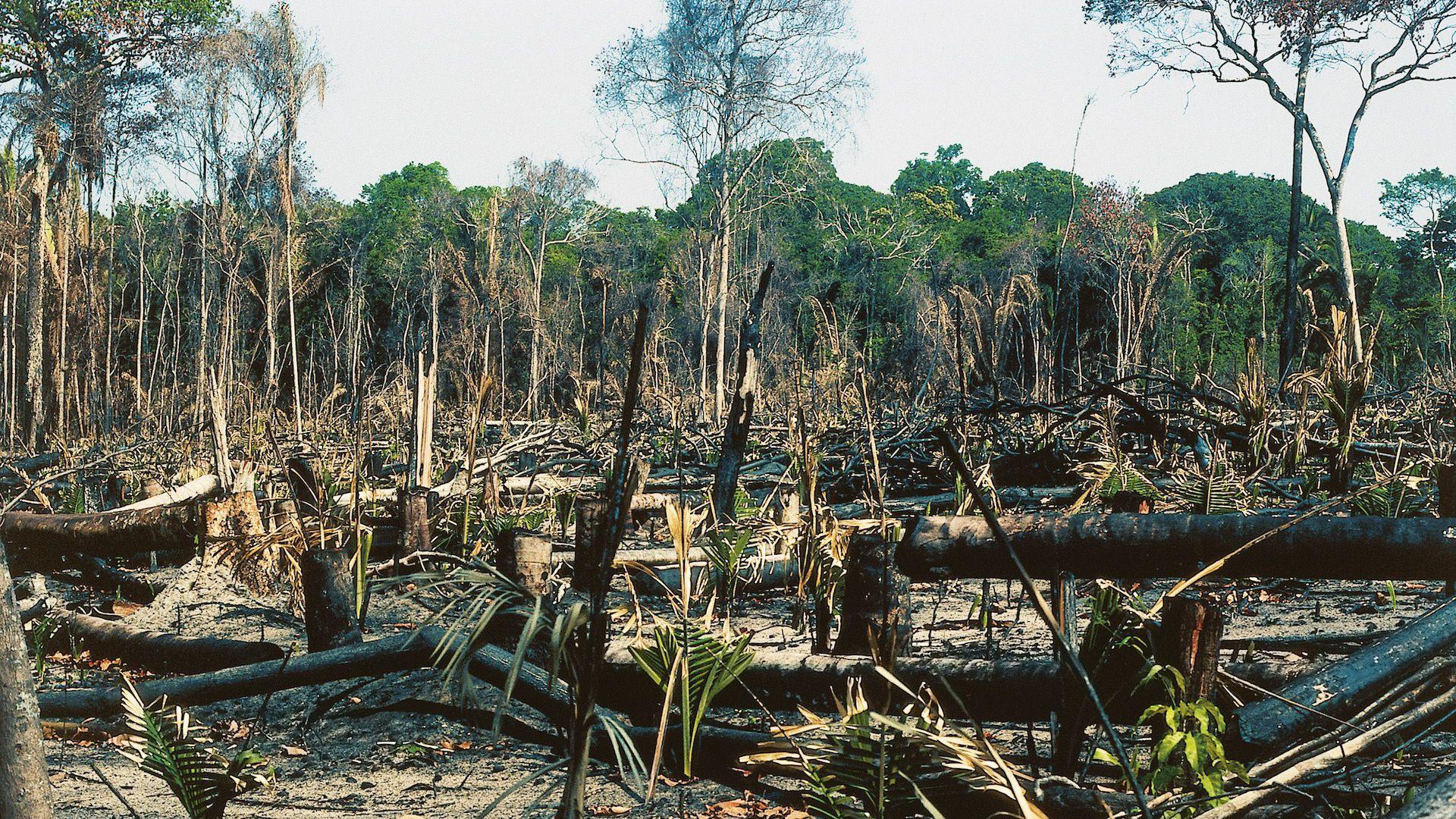 Deforestation in the Amazon rainforest, Brazil / Photo: DeAgostini/Getty Images.
