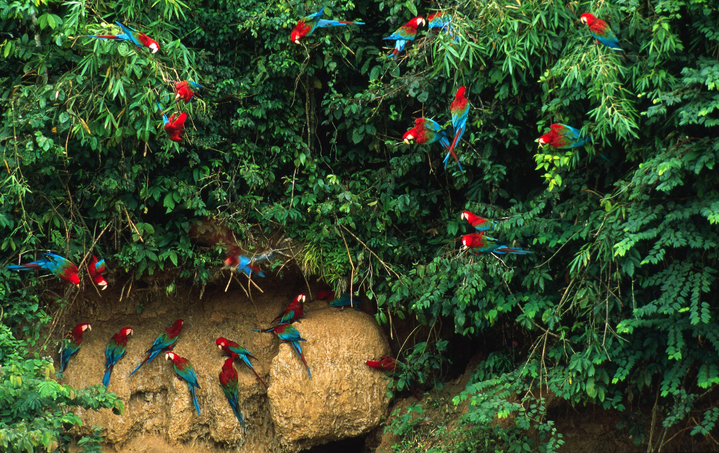 Biodiversity in Peru's Amazon.