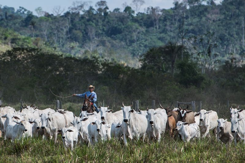Cattle farming is emission-intensive and often accompanies large-scale deforestation / Photo: Yasuyoshi Chiba/AFP/Getty.