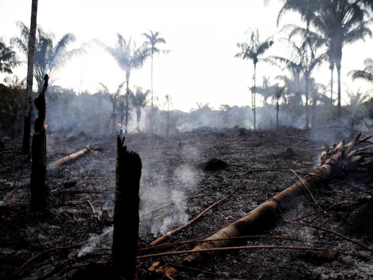 Part of the rainforest burned by loggers and farmers on August 20 / Photo: REUTERS/Bruno Kelly.