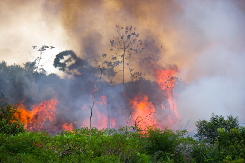 Record Number Of Fires Burning In Brazil's Amazon Rainforests