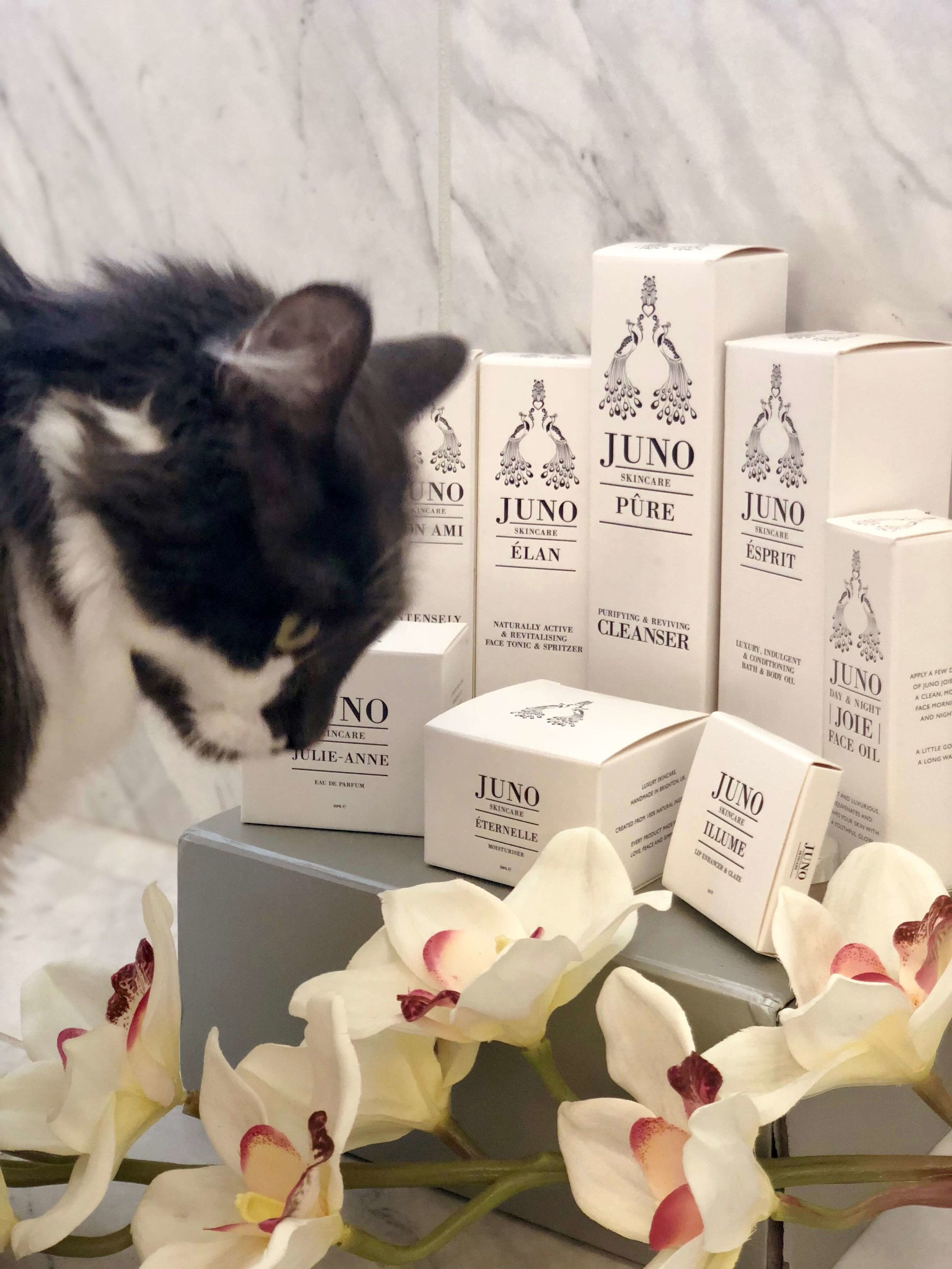 Going for a product shot but he wanted in and I couldn't not include my gorgeous boy in the pic since we wanted in on the action.