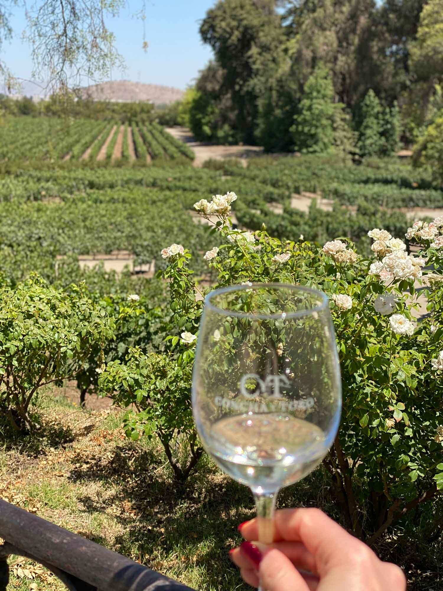Wine tasting at Conca Y Toro, Chile