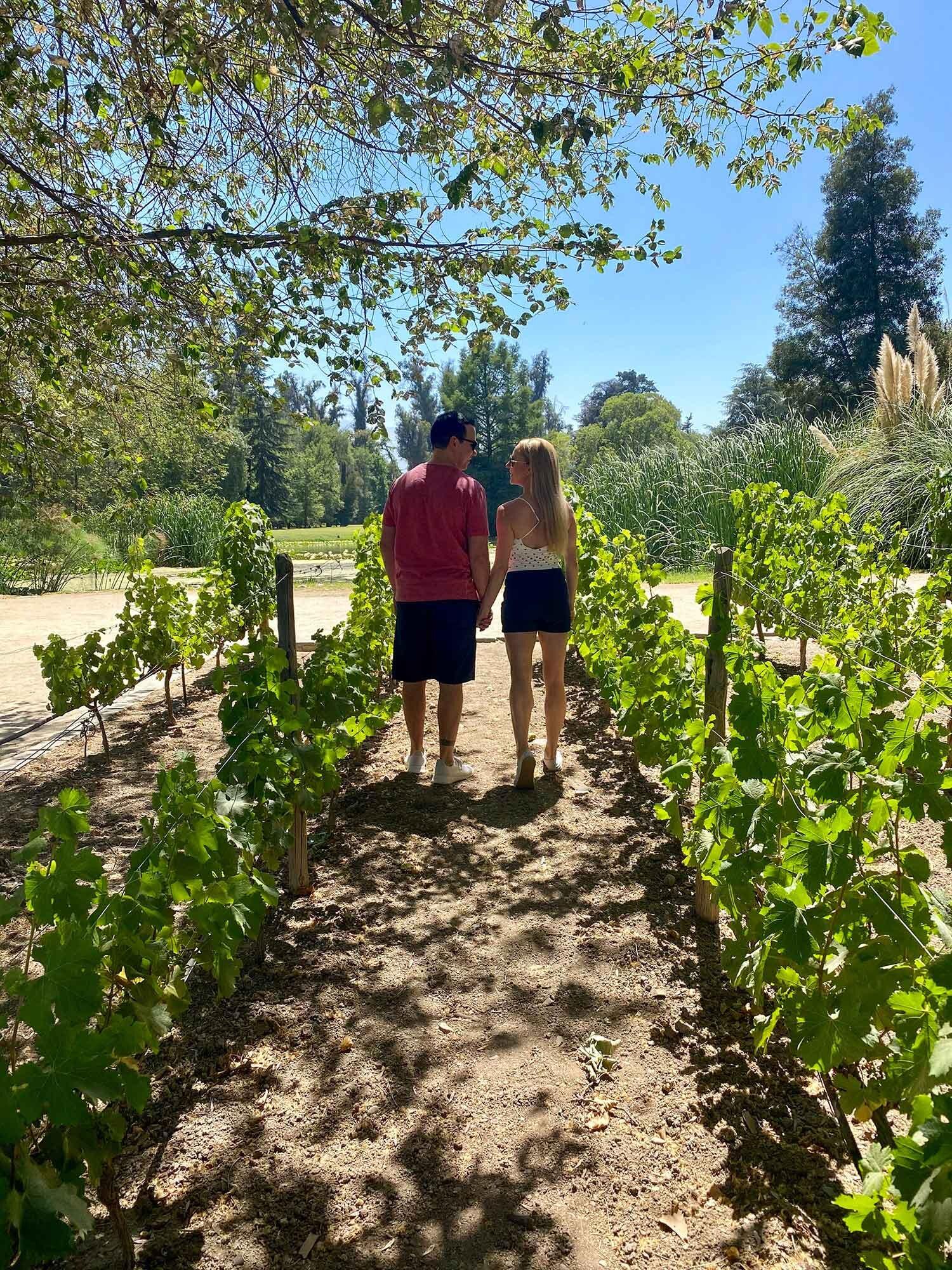 Concha Y Toro Wine Tour