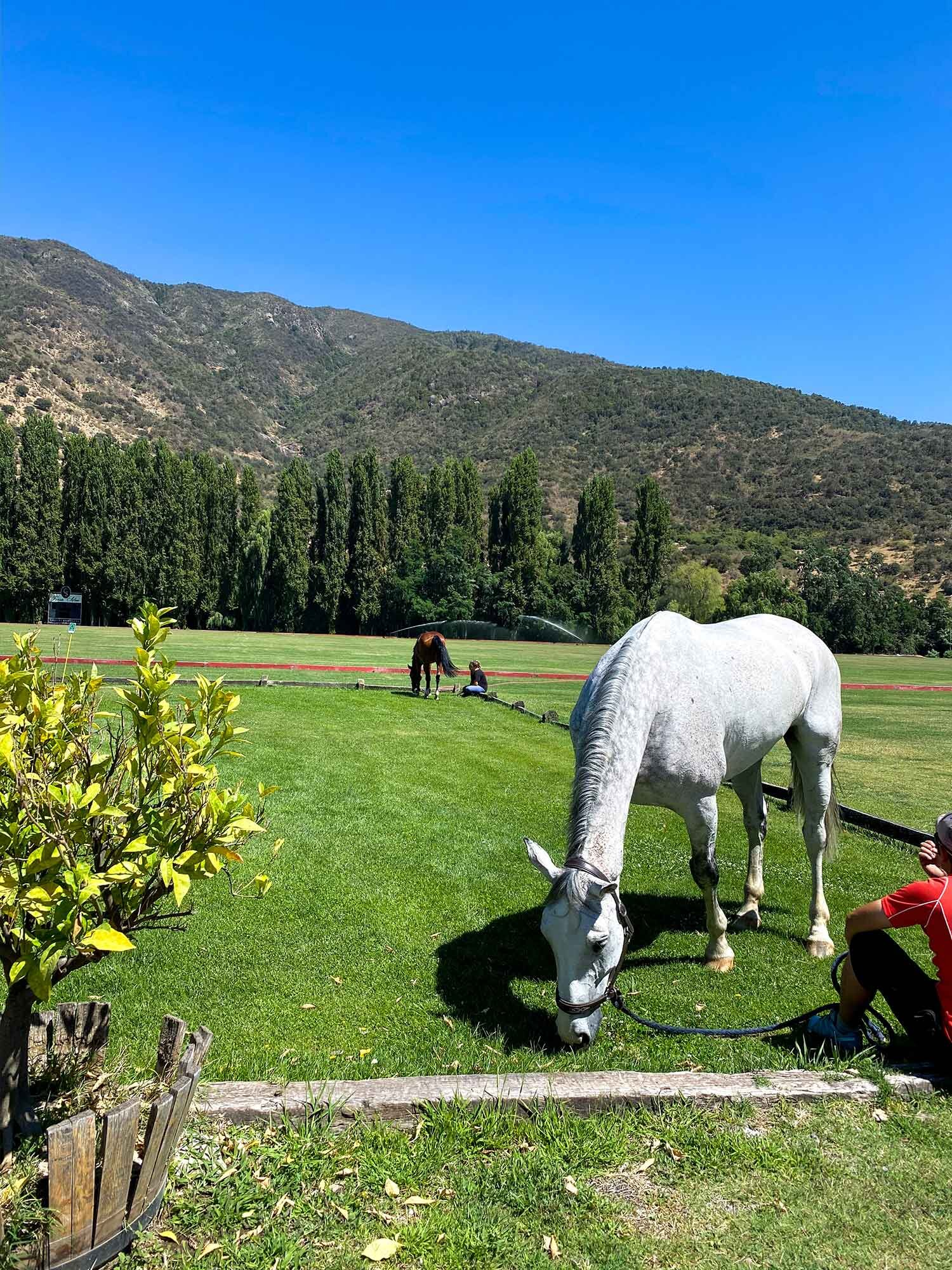 Casa Silva Polo Ponies