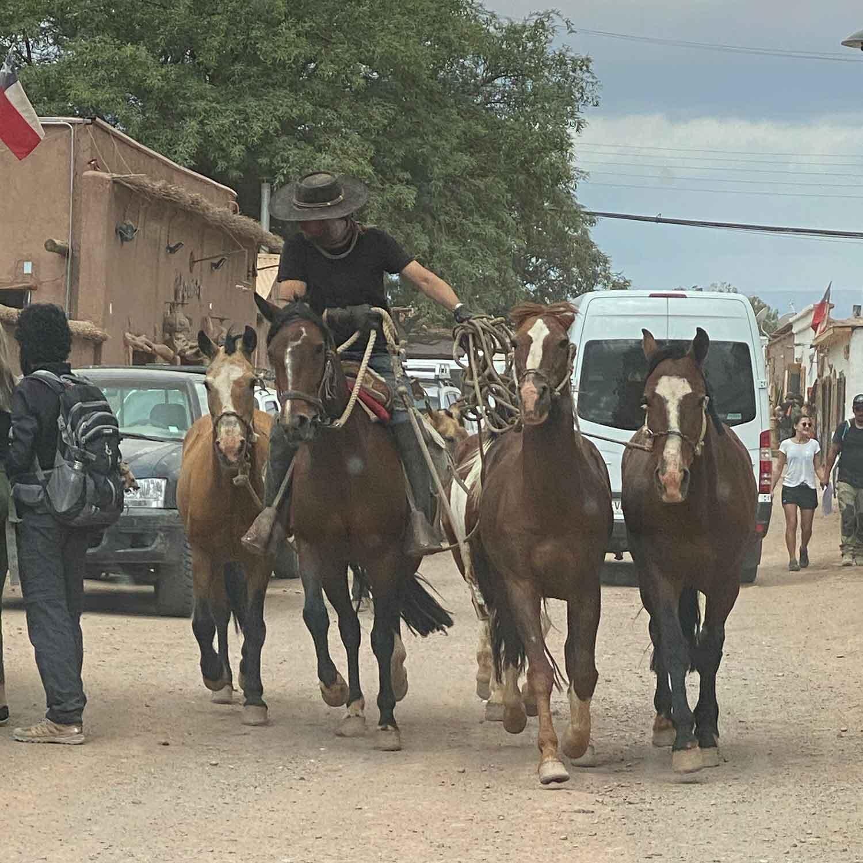 Horses running main street San Pedro Chile