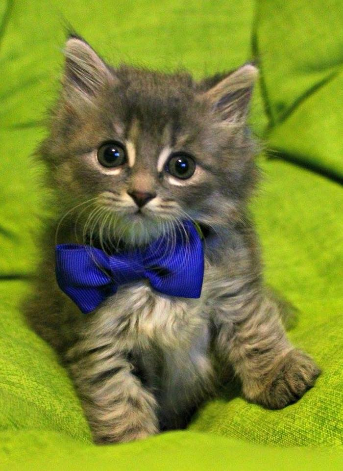 Dapper Cat.jpg