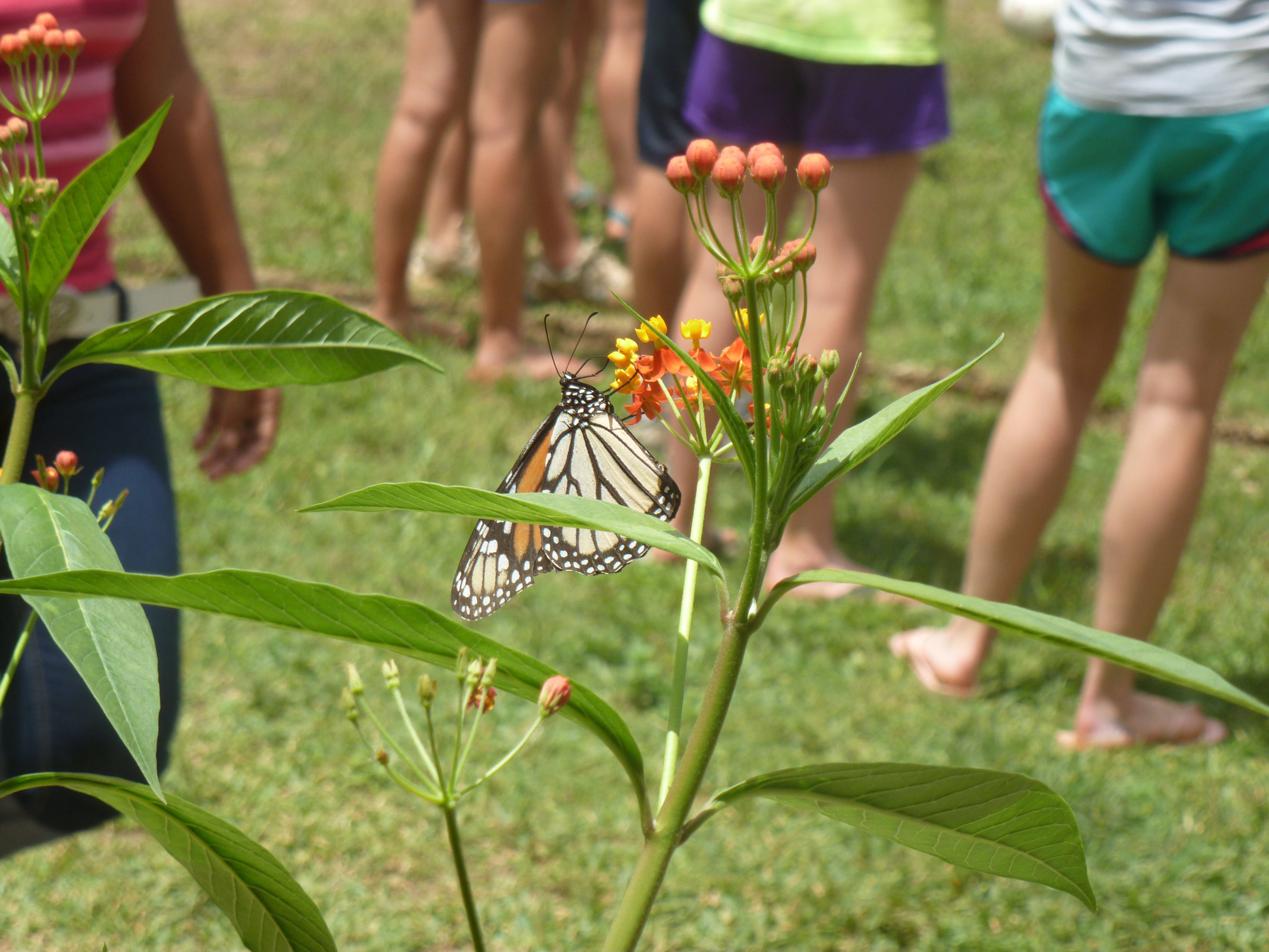 Butterfly at Learning Center