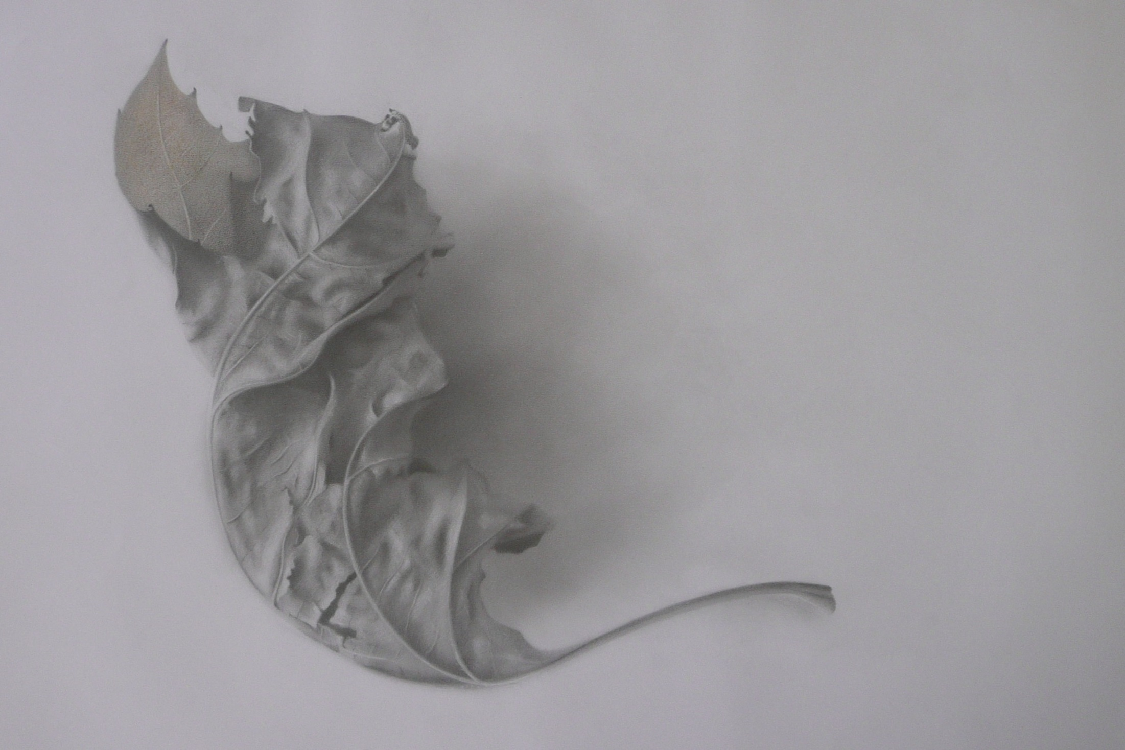 Leaf  (2018), Graphite on paper, 60cm x 85cm, £1450.