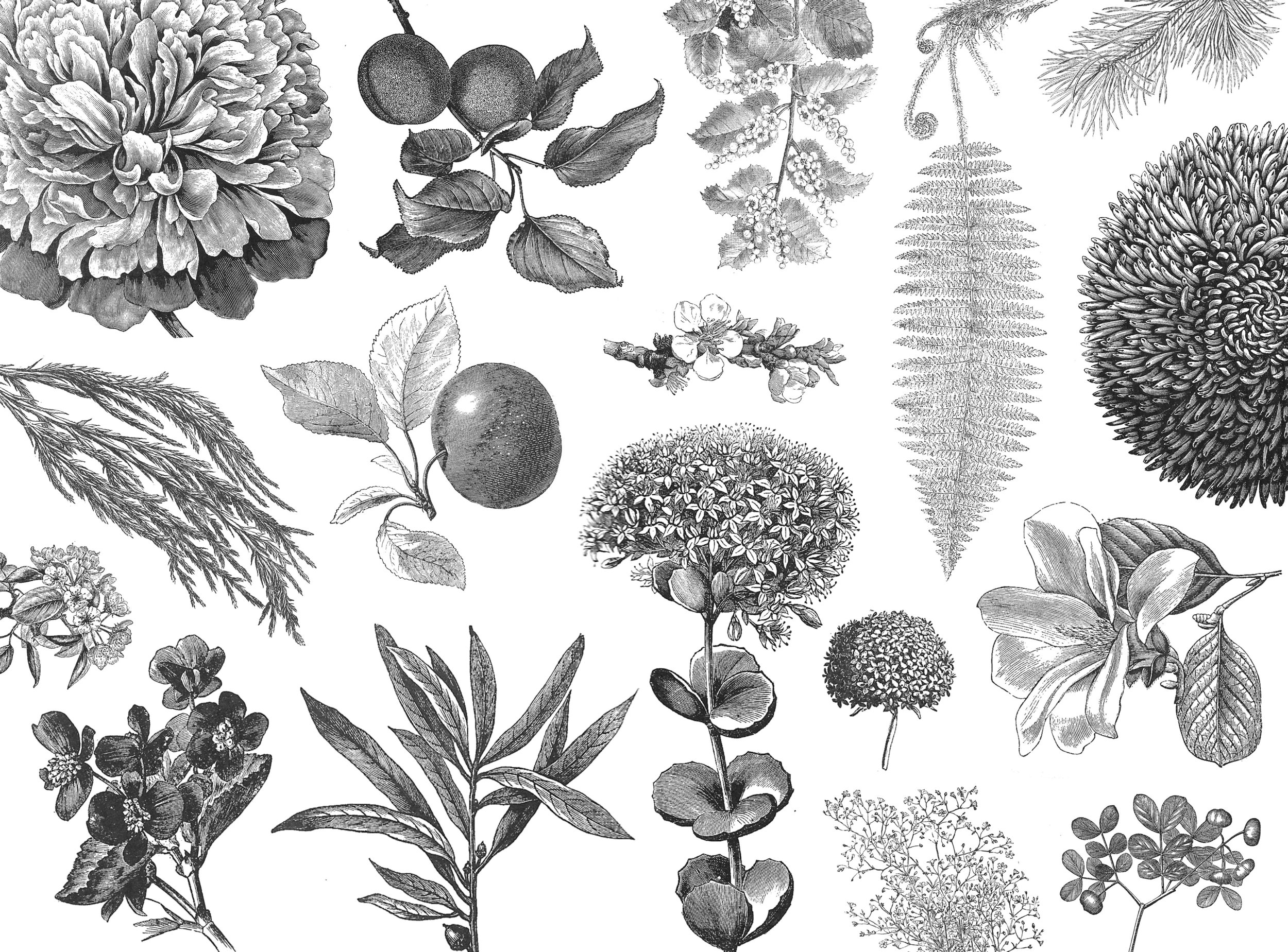 Found vintage floral illustrations adorn the bottles and allude to the many ingredients and natural scents used in the essential oils.