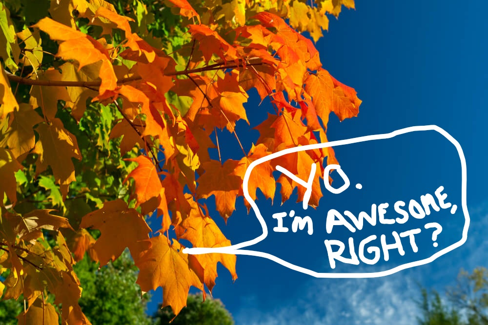 Autumn + Taxes = Summer is officially over.