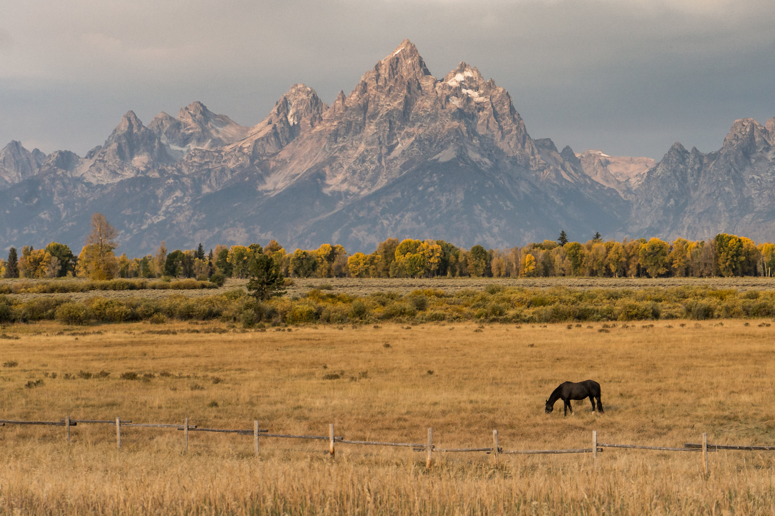Lone Horse in Grand Teton National Park
