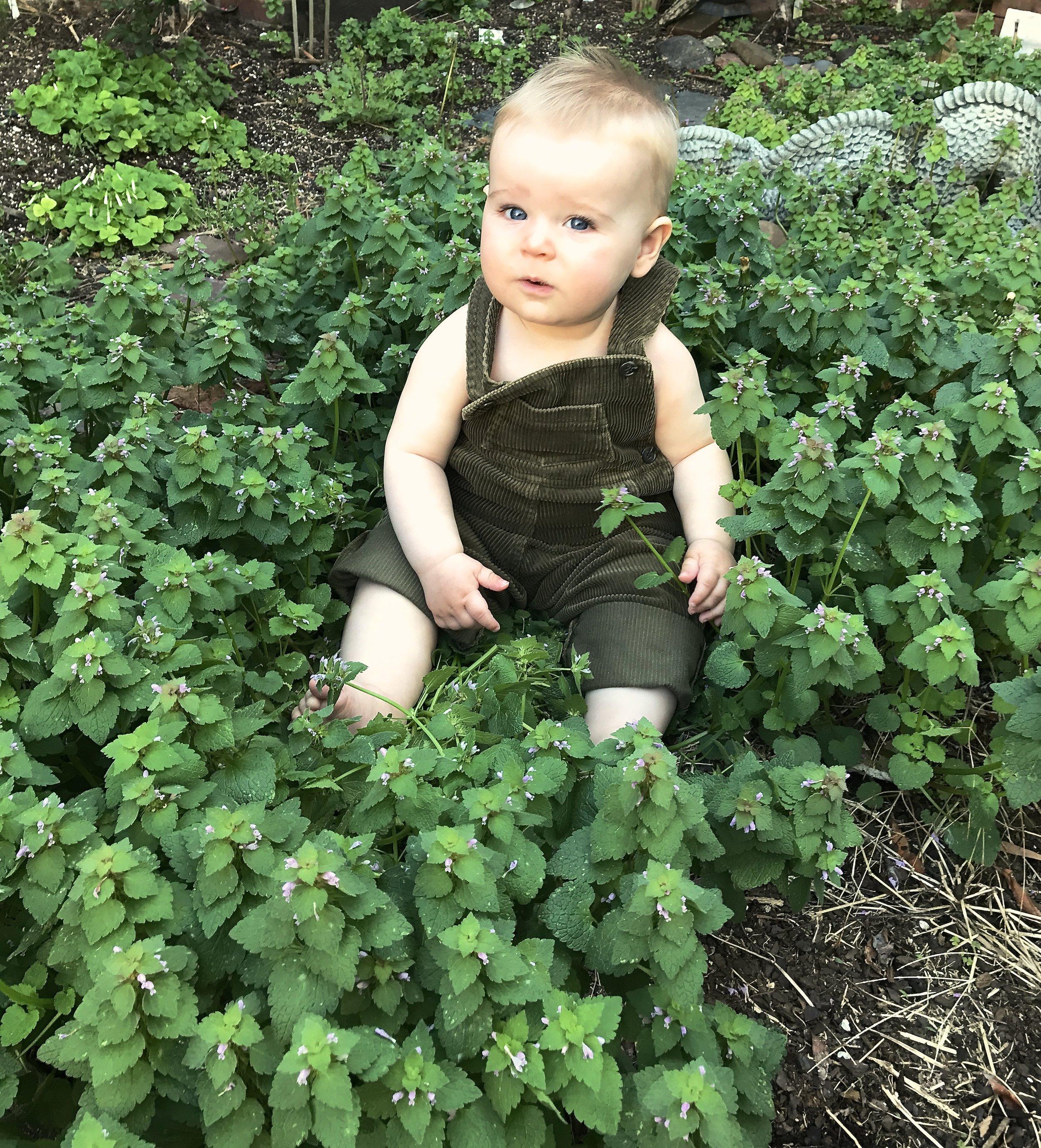 Finnleyingreenflowers