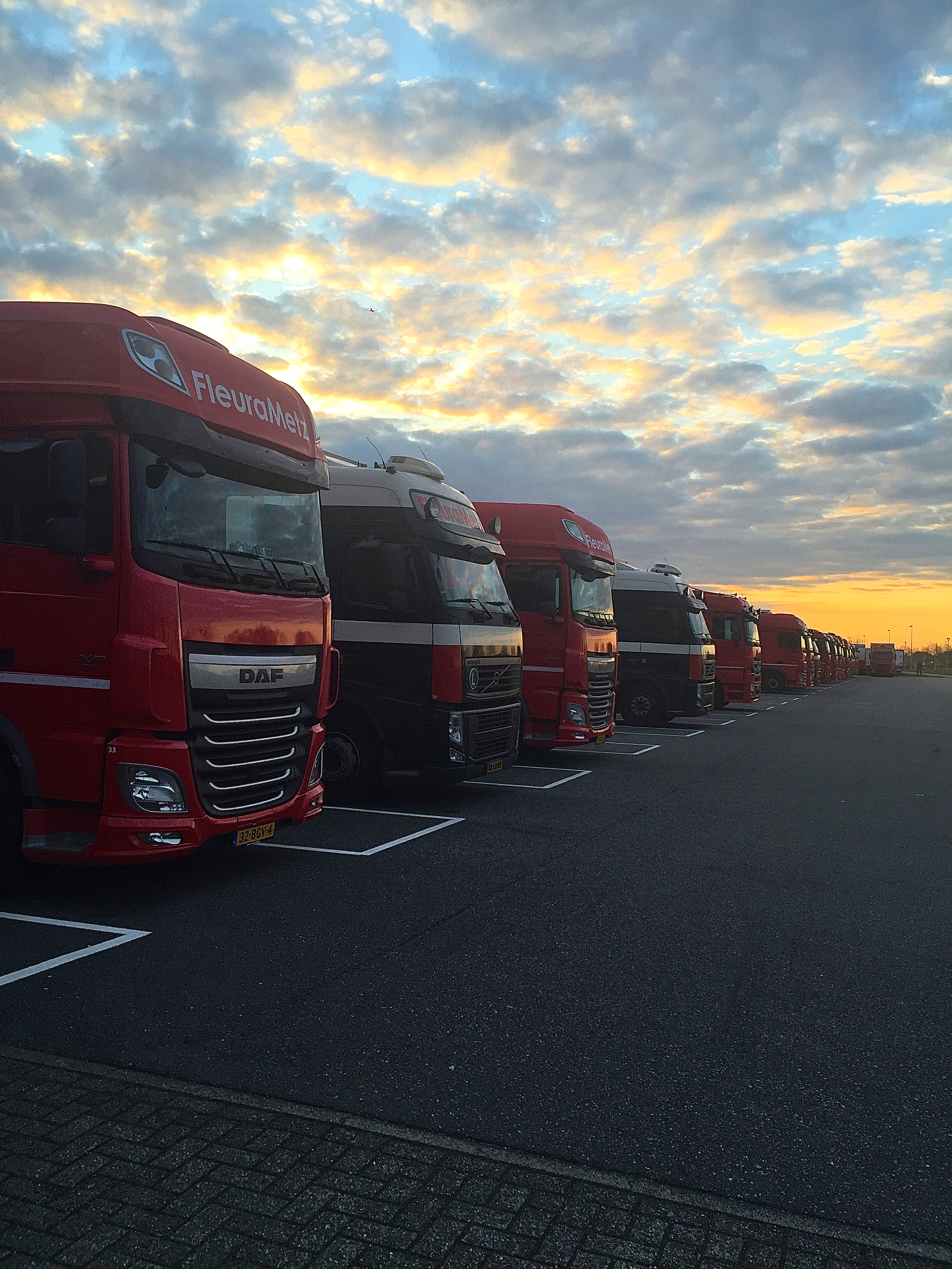 FleuraMetz's climate controlled trucks lined up and ready for delivery.