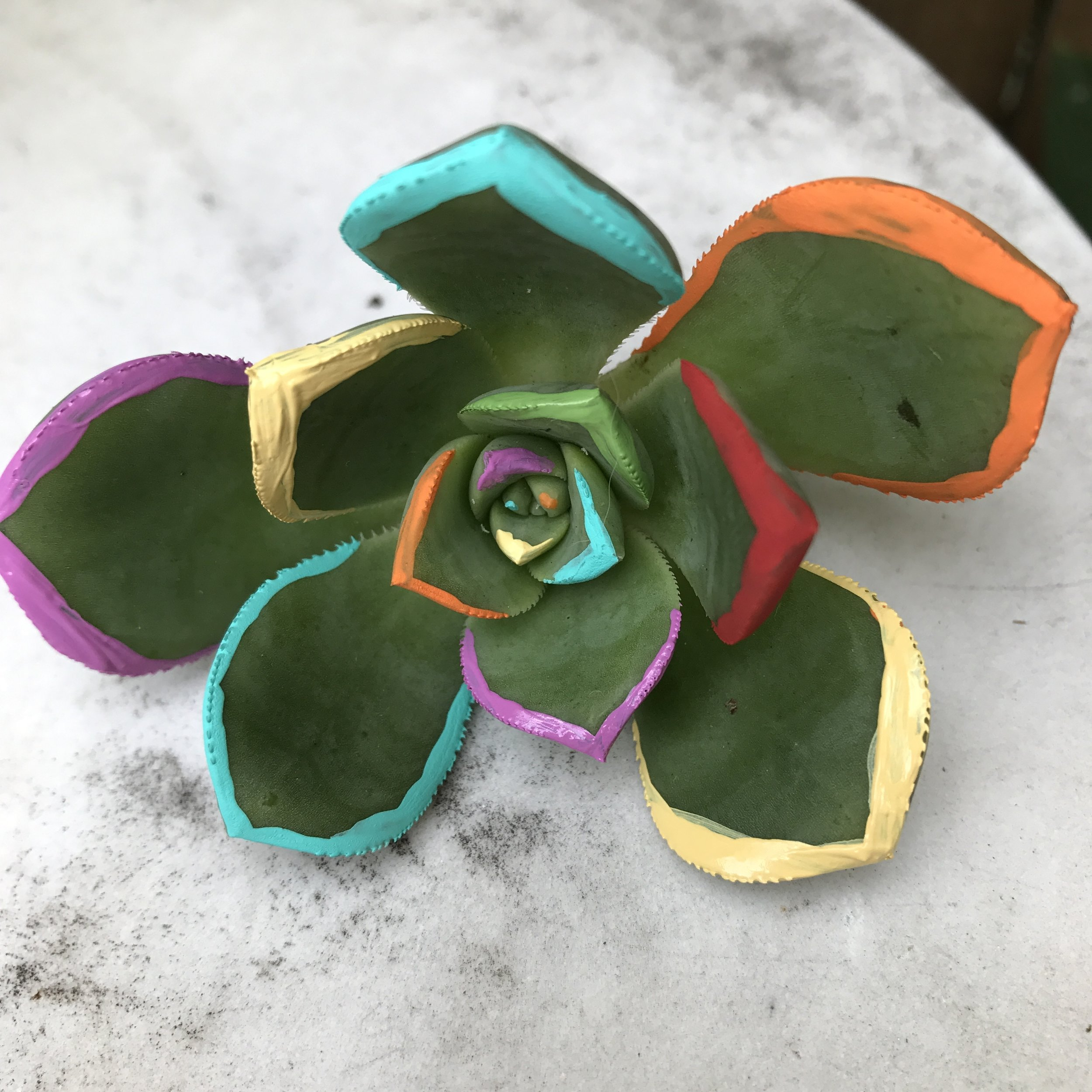 I love this acrylic painted succulent as a new twist on the green plants!