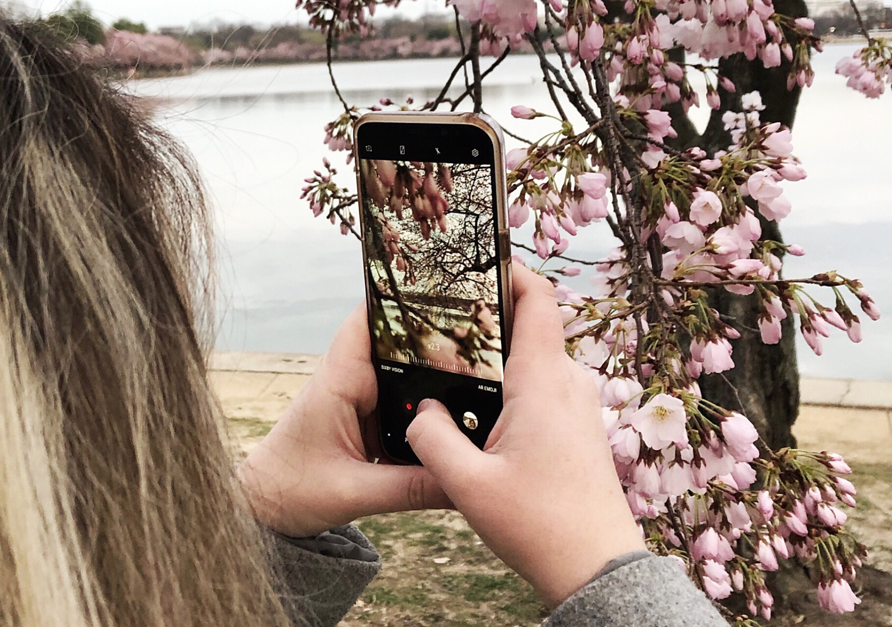 Brittany-iphone-cherry-blossoms