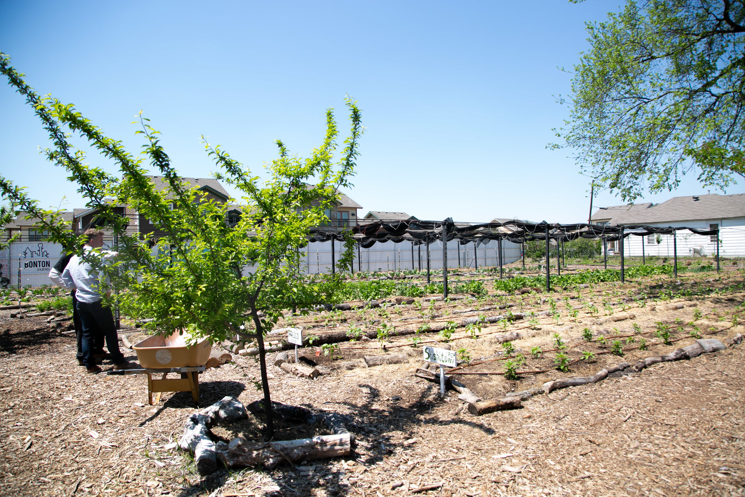 What began as a small project in Daron's garden grew into what the city of Dallas now knows and loves as Bonton Farms.