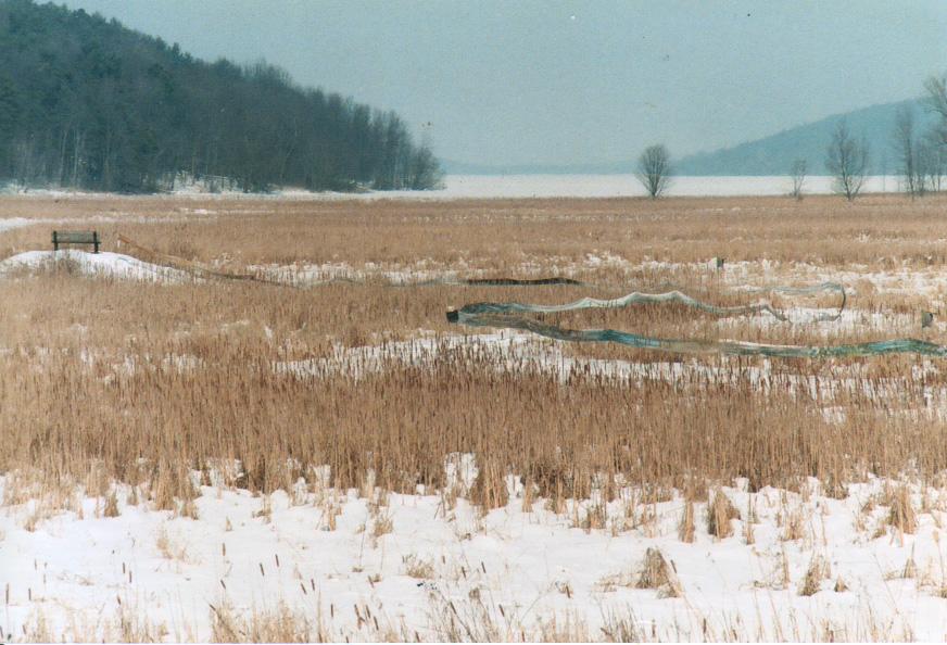 scroll.winter1.jpg