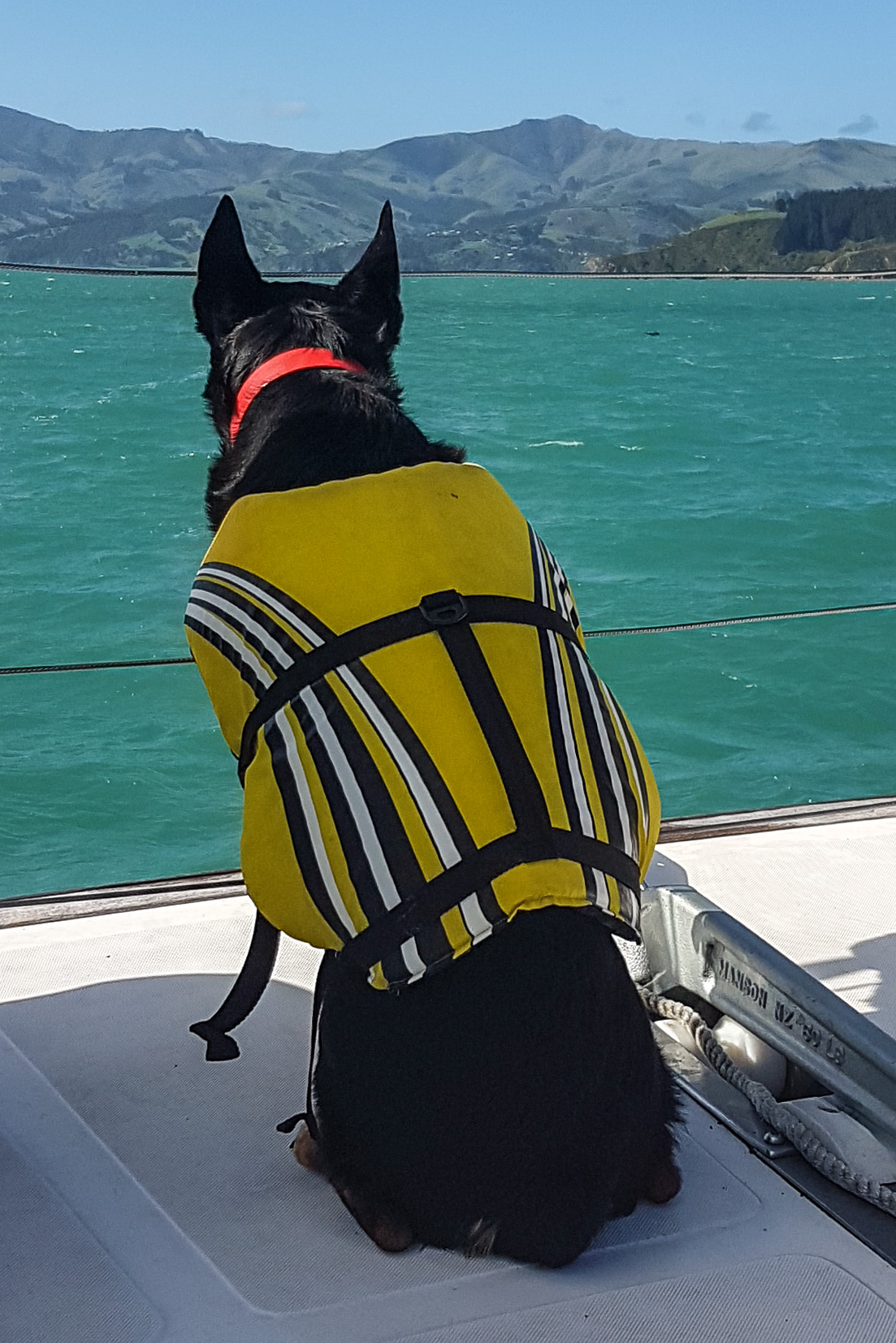 Jet our dolphin spotting dog...... unfortunately didn't capture any images of the dolphins!