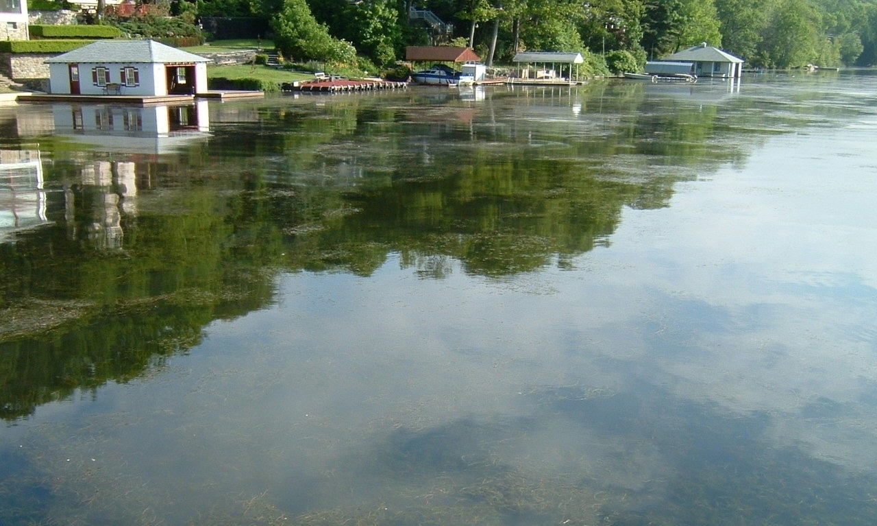 Milfoil Canopies on the Surface.jpg