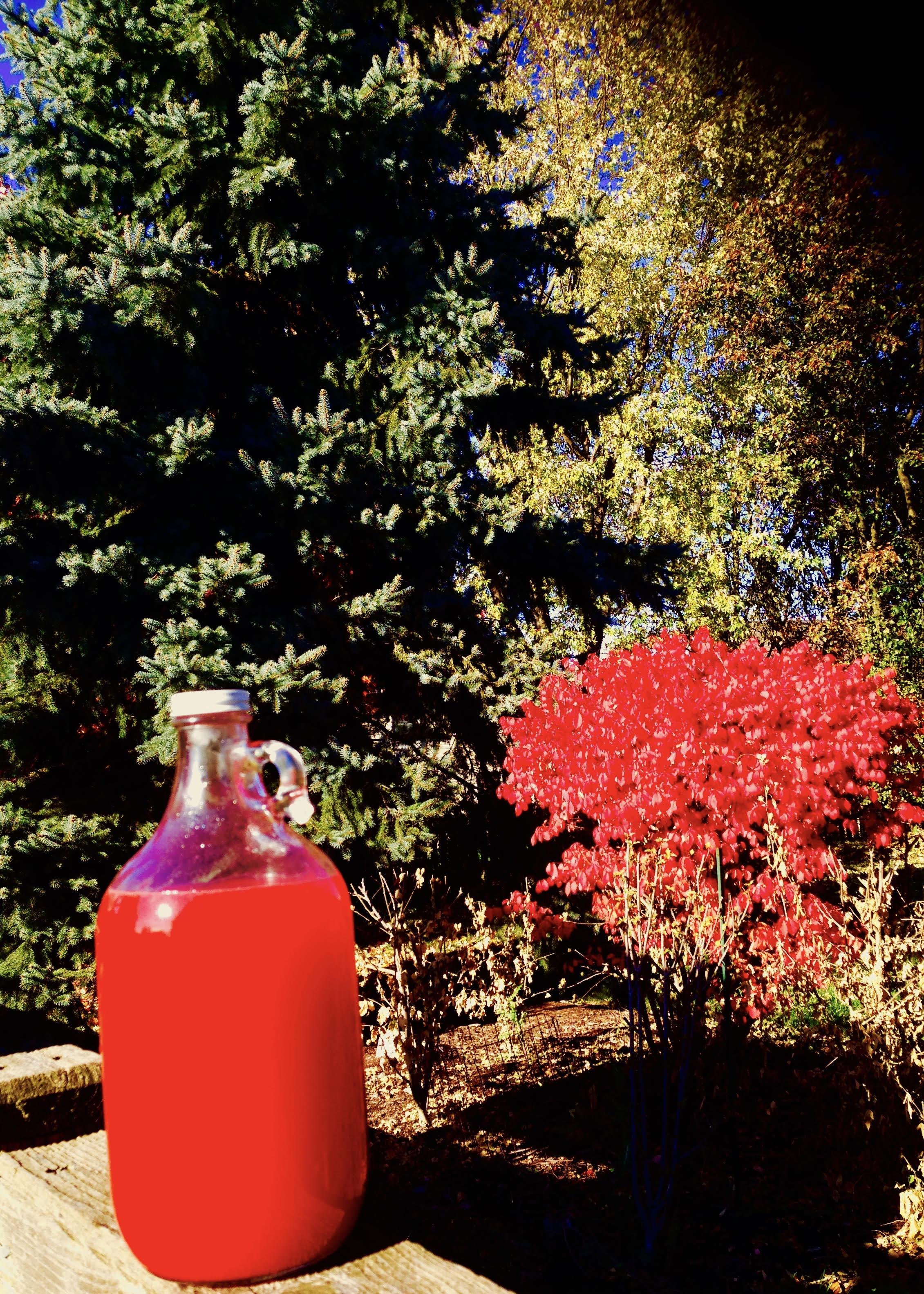 cranberry-delight-2.jpg