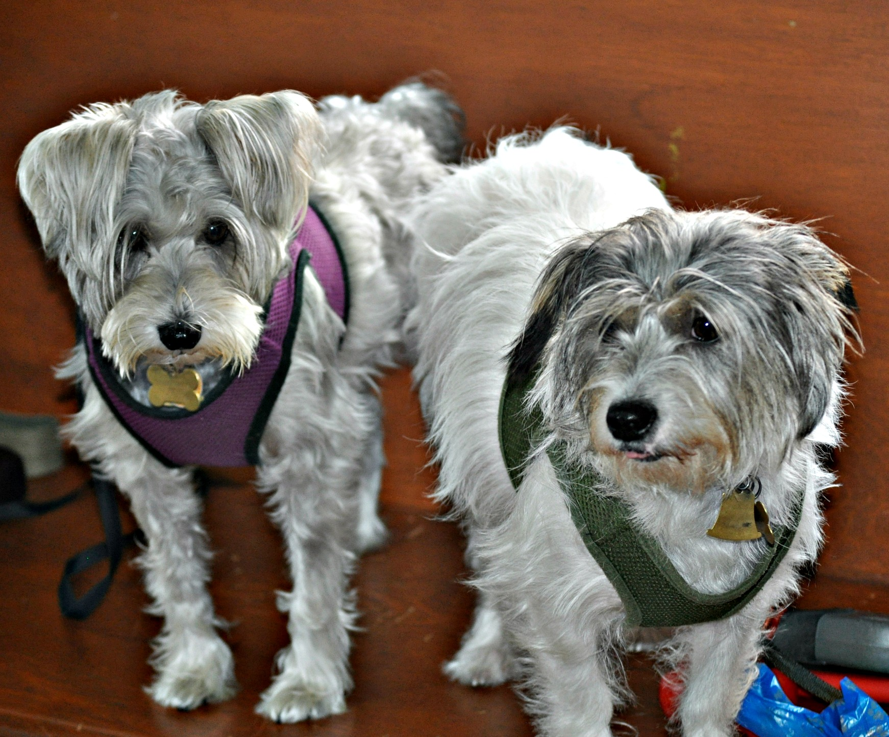 Blessing of the Animals October 2, 2016