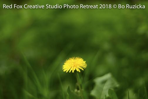 red fox creative studio - photo retreat 2018-.jpg