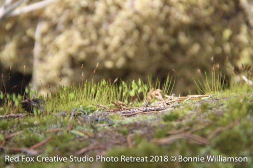 red fox creative studio - photo retreat 2018-0299.jpg