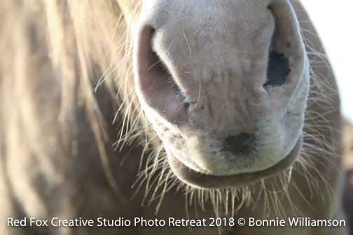 red fox creative studio - photo retreat 2018-0544.jpg