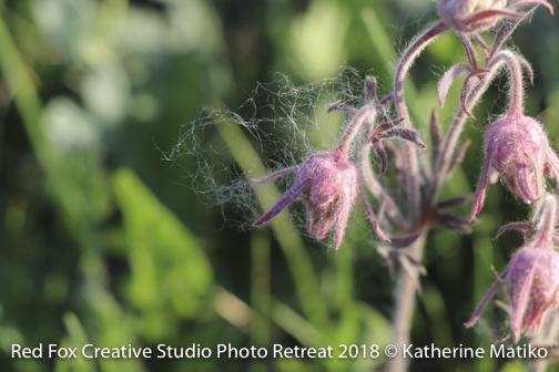 red fox creative studio - photo retreat 2018-3088.jpg