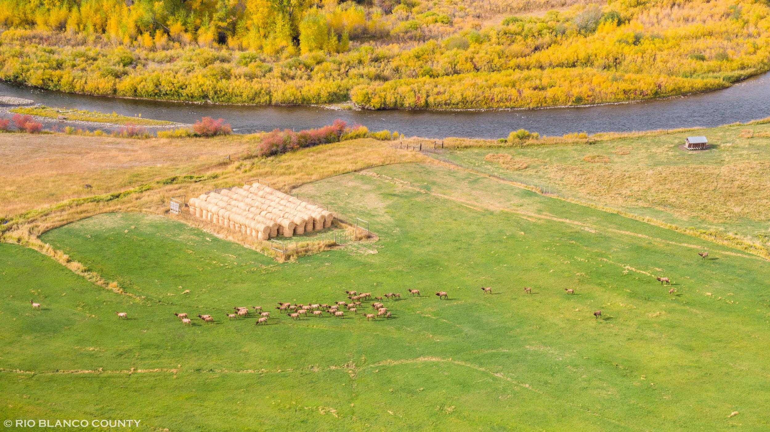 Elk Herd 1.jpg